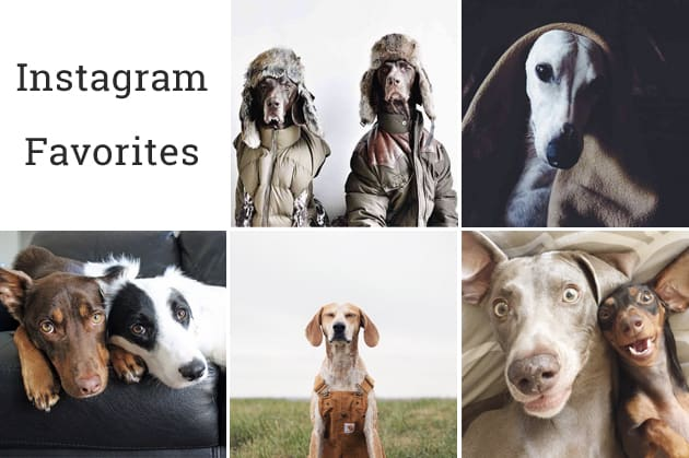 Instagram Favorites Dog