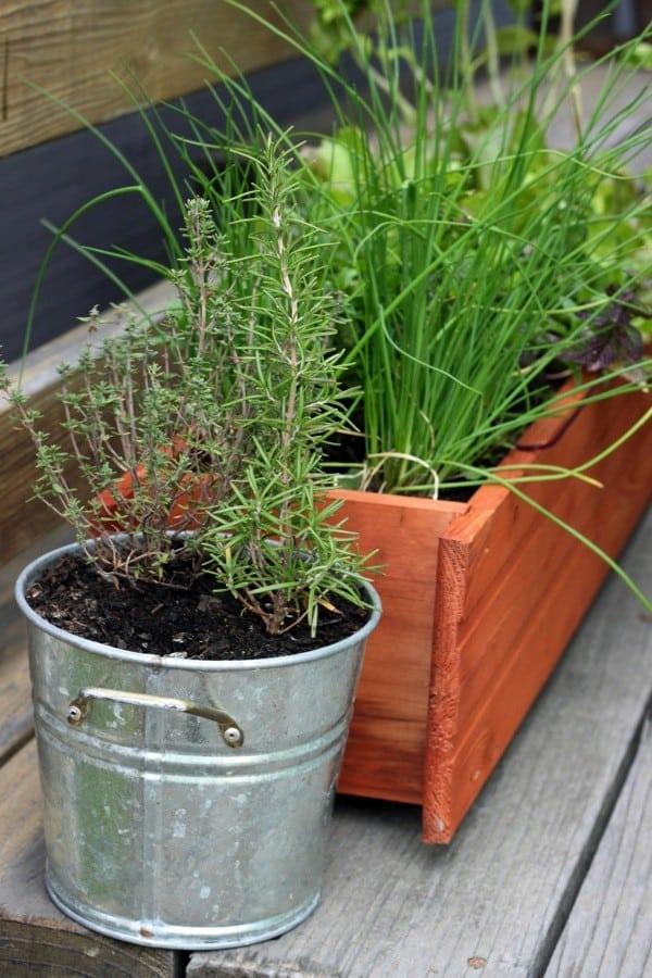 Urban herb garden after1