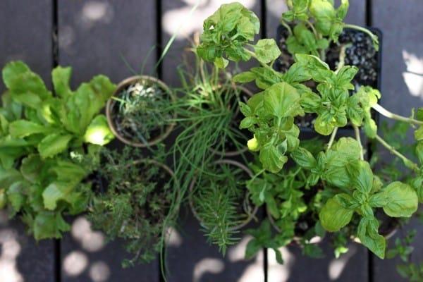 Urban herb garden1