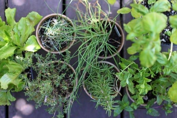Urban herb garden2